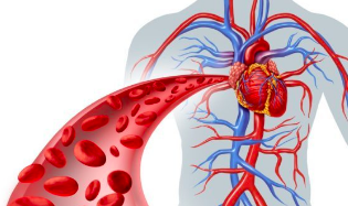 General/Vascular Surgery